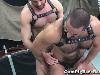 Hairy bear rimmed and sprayed with cum